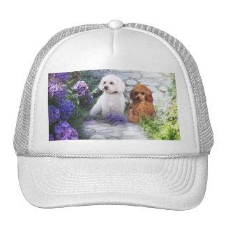 Hydrangea del gorra del caniche