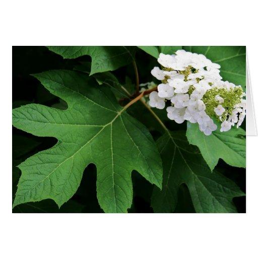 """""""hydrangea del oakleaf"""" por Larry Coressel Felicitaciones"""