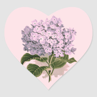 Hydrangea del vintage en violeta calcomanía corazón