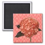 Hydrangea en modelo rosado imán para frigorifico