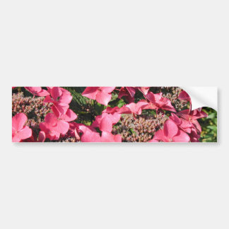 Hydrangea. Flores rosadas Etiqueta De Parachoque