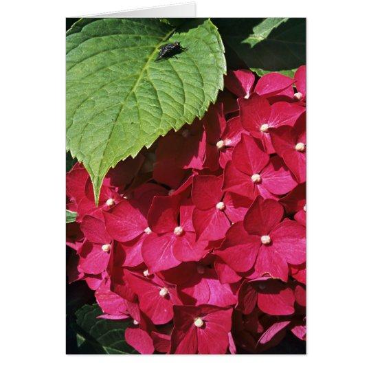 Hydrangea Flower Head Card