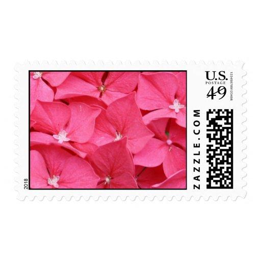Hydrangea flower in Bright Pink Postage Stamp