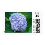 Hydrangea Flowers Postage Stamps Floral