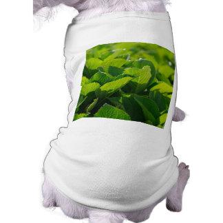Hydrangea foliage shirt