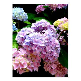Hydrangea Gardens Postcard