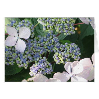 Hydrangea Greeting or Thank You Card
