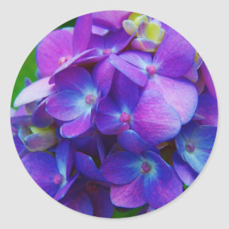 Hydrangea Híper-Púrpura Pegatina Redonda