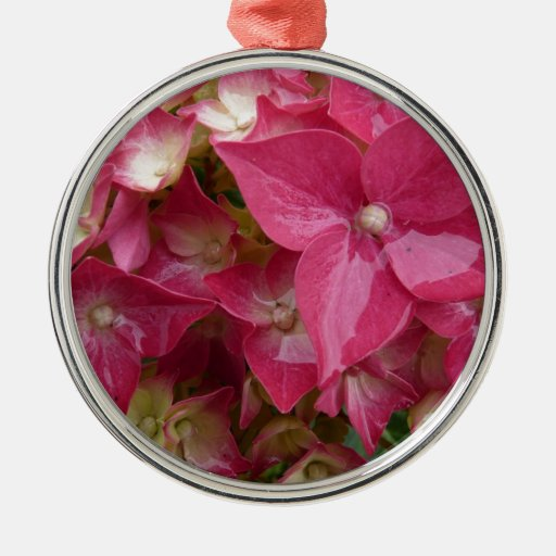 Hydrangea in pink christmas ornaments