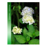 Hydrangea in the forest postcards