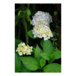 Hydrangea in the forest print