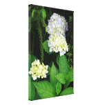Hydrangea in the forest stretched canvas print