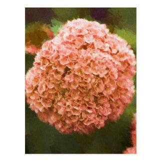 hydrangea in the garden postcard