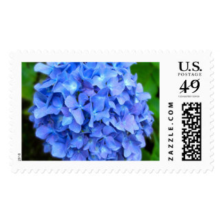 Hydrangea Large Postage Stamps