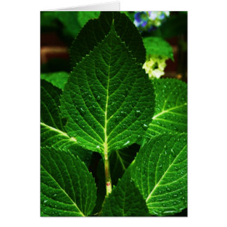 """hydrangea leaves"" card"