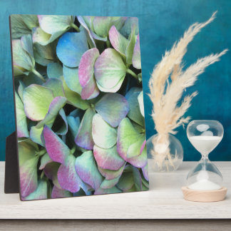 HYDRANGEA  Multi-color petals --- Plaque