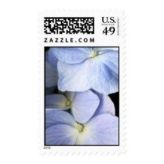 Hydrangea Petals Postage Stamp