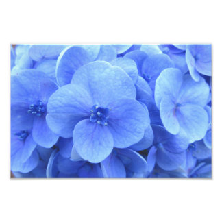 hydrangea photo print