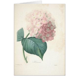 Hydrangea por la tarjeta de condolencia botánica