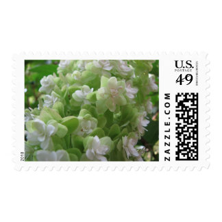 hydrangea postage stamps
