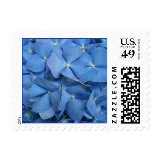 Hydrangea Postage Stamp