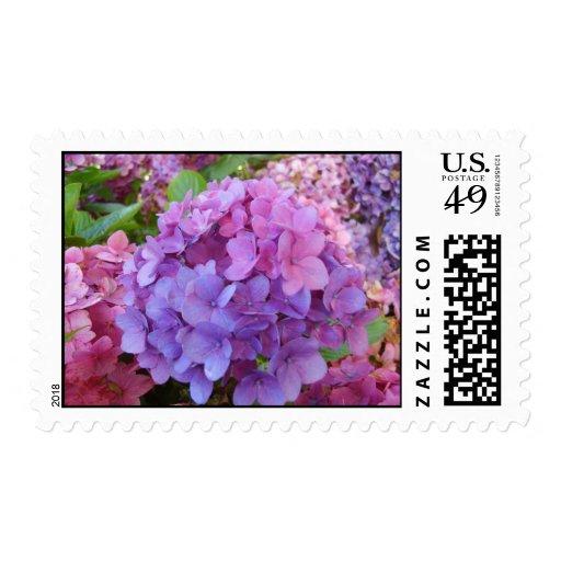 Hydrangea Postage Stamps