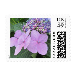 Hydrangea Purple Blooming Flower Stamps