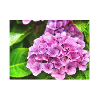 Hydrangea Purple Canvas Print