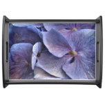 Hydrangea púrpura bandejas