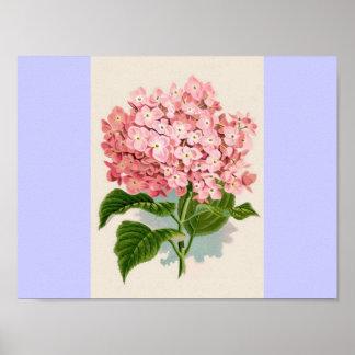 Hydrangea rosado del vintage póster