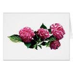 Hydrangea rosado felicitación