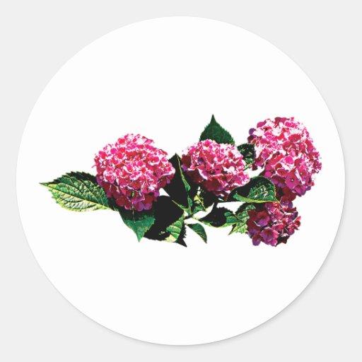 Hydrangea rosado pegatinas