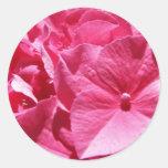 Hydrangea rosado pegatinas redondas