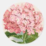 Hydrangea rosado romántico botánico antiguo etiquetas redondas
