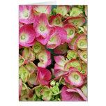 Hydrangea rosado tarjeta