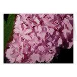 Hydrangea rosado tarjetas