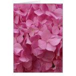 Hydrangea rosado tarjeton