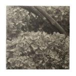Hydrangea secado en un tono de la sepia azulejo cerámica