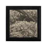 Hydrangea secado en un tono de la sepia caja de regalo