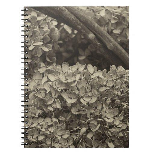 Hydrangea secado en un tono de la sepia cuadernos