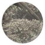 Hydrangea secado en un tono de la sepia platos