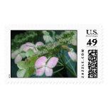 hydrangea variety stamps