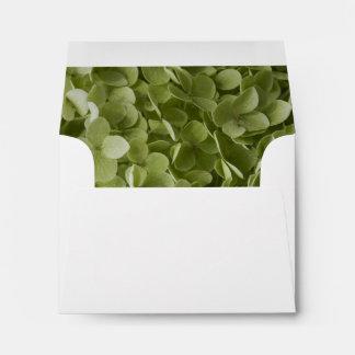 Hydrangea verde de Annabelle que casa el sobre de