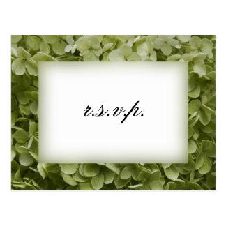 Hydrangea verde de Annabelle que casa RSVP Postales
