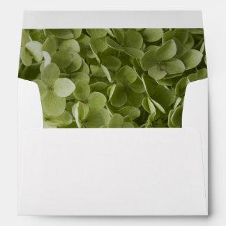 Hydrangea verde de Annabelle Sobres