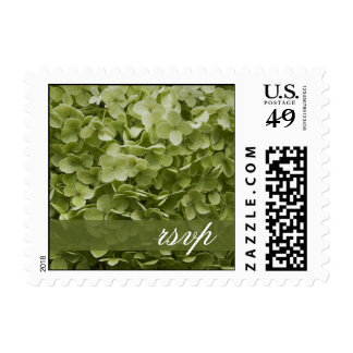 Hydrangea verde RSVP que se casa floral de Timbres Postales