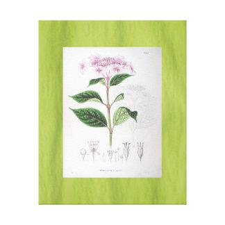 Hydrangea Vintage Art Canvas Pink Green