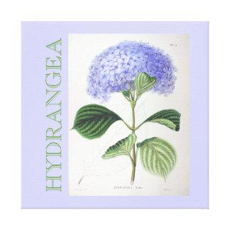 Hydrangea Vintage Art Canvas Purple