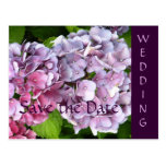 Hydrangea Wedding Save the Date Postcard