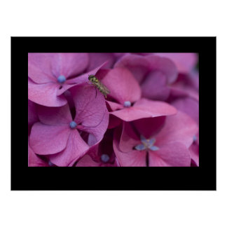 Hydrangea with Wasp Poster